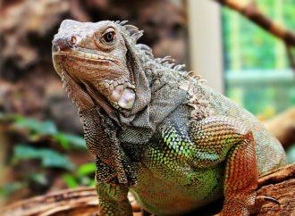 Drie beste dierentuinen van Nederland